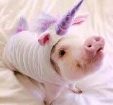 Piggy in Unicorn Outfit