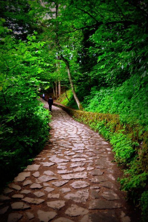 Altındere Milli Park, (The National Park) Trabzon, Turkey,