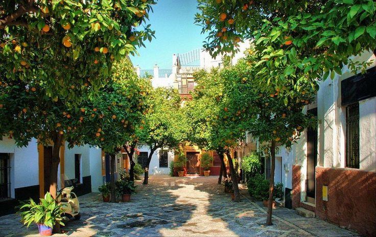 Апельсиновые деревья в Севилье, Испания