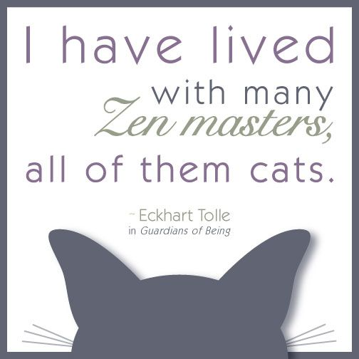 Eckhart Tolle quote - Zen master cats and like OMG! get some yourself some pawtastic adorable cat apparel!