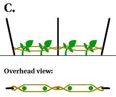 The most straightforward explanation and diagram we've seen of the Florida Weave, a great way to string your tomatoes.