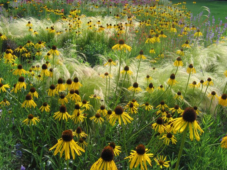 Ein Pflegeleichter Garten : Ein pflegeleichter Garten, der in den schönsten Farben leuchtet und