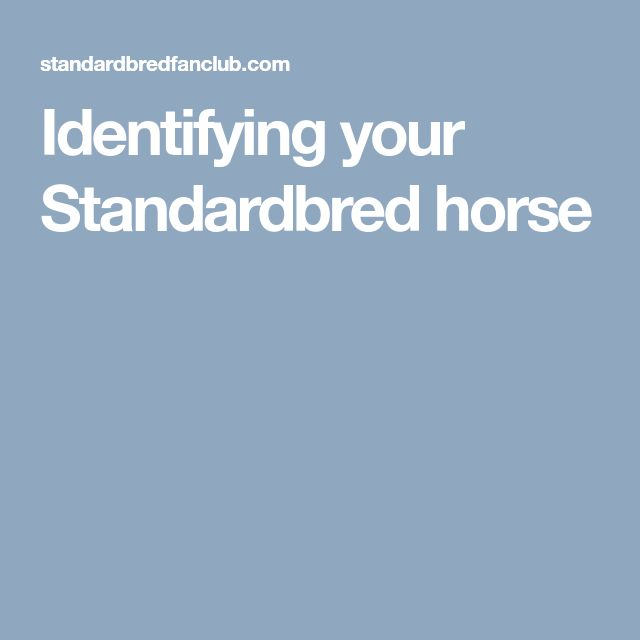 Identifying your Standardbred horse