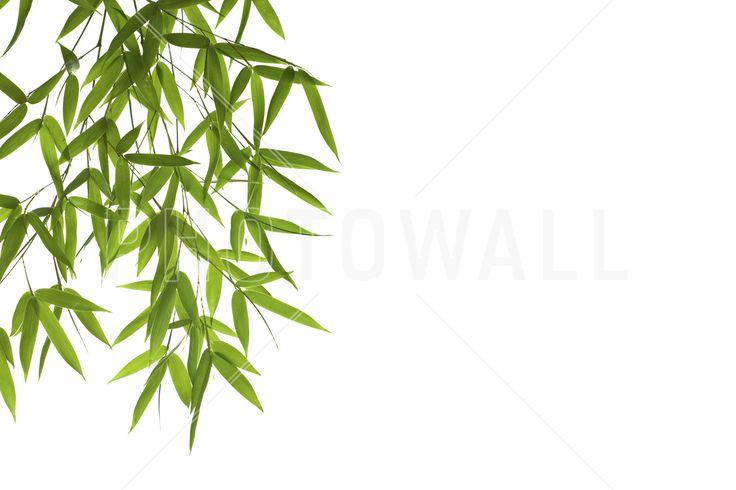 Hanging Bamboo - Fototapeter & Tapeter - Photowall