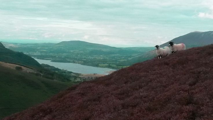 Heather on the hills
