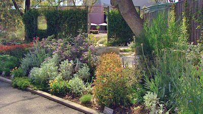 Native Garden Inspiration - Gardening Australia - Australian Native Garden in the Botanic Gardens of Adelaide which is a series of rooms highlighting some classic gardening styles with a twist - the entire garden is planted with Australian native plants.