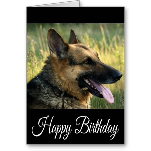 Smart Deals for Happy Birthday German Shepherd Puppy Dog Card – German Shepherd Birthday Cards