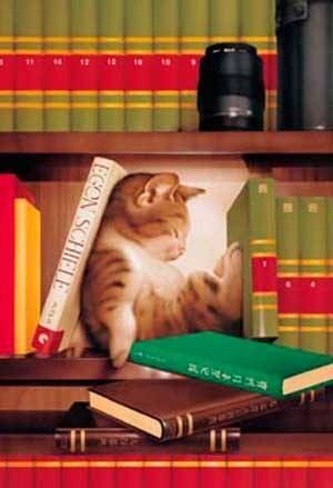any nook or cranny will do... Cat kitten adorable gorgeous love