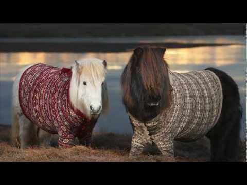If this tourist ad doesn't make you smile, check your pulse! Shetland Ponies in Cardigans from VisitScotland