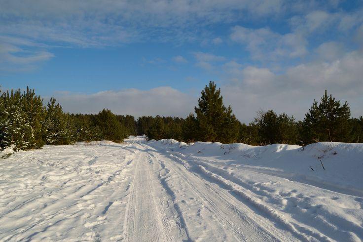 https://flic.kr/p/V5otmX | Snowy way.