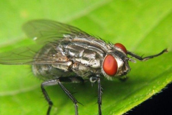 M s de 1000 ideas sobre repelente de moscas casero en - Como matar las moscas de mi casa ...