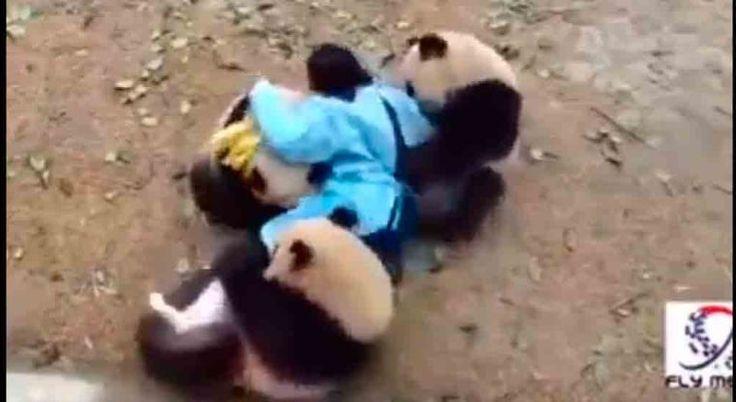 """Video: imágenes que dan sentido a la frase """"abrazo de oso""""   EL DEBATE"""