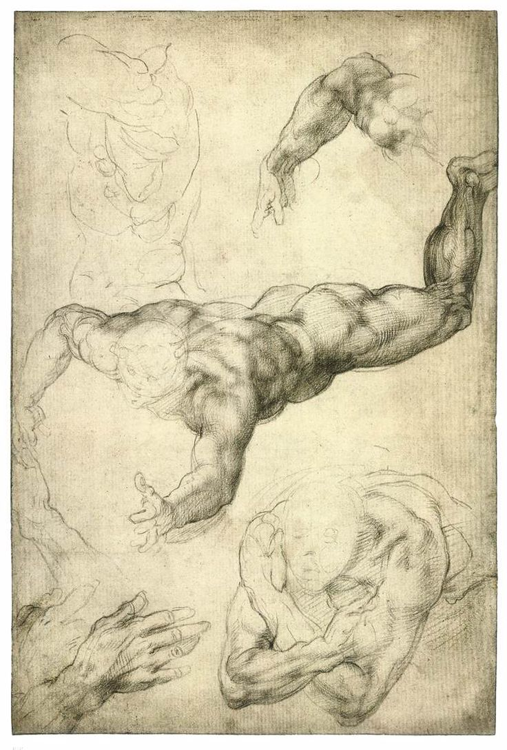 best ideas about michelangelo michelangelo pieta michelangelo studies for a flying angel black chalk 407 x 272 mm