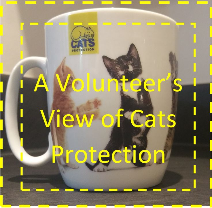 A Volunteers View of Cats Protection Kitten care, Cats