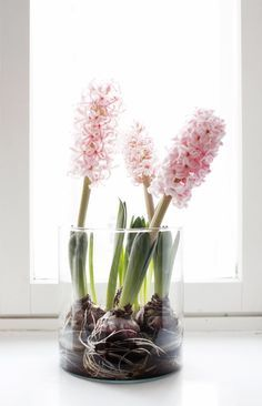 scandinavian hyacinth decoration