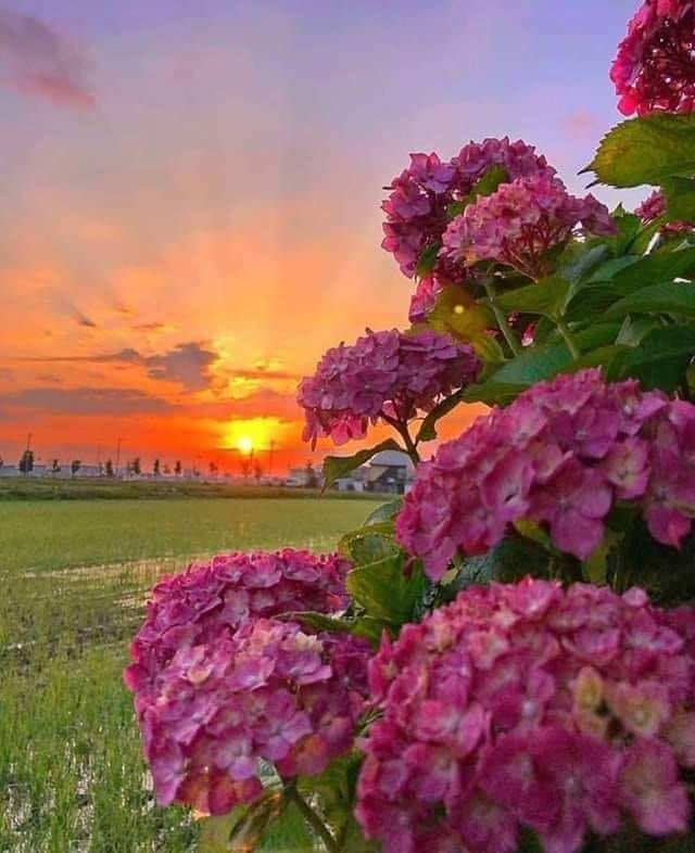 Https Www Facebook Com Flowers 143myinspiration Photos A 741695622650503 119282 Landscape Photography Nature Beautiful Gardens Photography Inspiration Nature