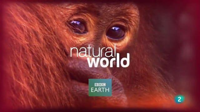 #Bichos raros de la #Naturaleza BBC  http://www.documentalesgratis.es/bichos-raros-naturaleza-bbc/?utm_campaign=crowdfire&utm_content=crowdfire&utm_medium=social&utm_source=pinterest