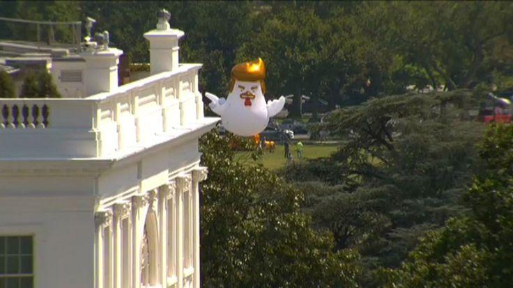 """⚡️ """"Una gallina inflable que luce como Trump sobrevoló la Casa Blanca""""https://twitter.com/i/moments/895407158044524544"""