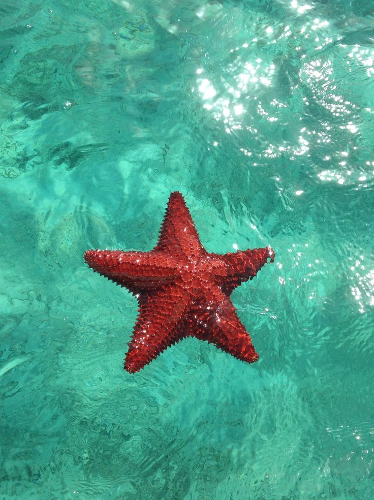 The very best things to do in the Exuma Cays (Bahamas) including searching for starfish.