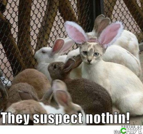 They suspect nothing easter quotes easter images easter quote happy easter happy easter. easter pictures funny easter quotes happy easter quotes quotes for easter