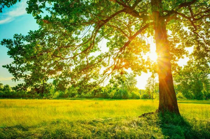 Summer Sun peeking from a tree....n most time zones in the Northern Hemisphere, June 21, 2015, will be the longest day of the year. Here are 11 facts you might not know about the June Solstice.
