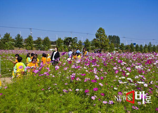 <<주말 나들이 ´구리한강 코스모스공원´>> (구리한강시민공원 코스모스 축제장에서 © 뉴스바로 장덕수 기자 2014.10.9)
