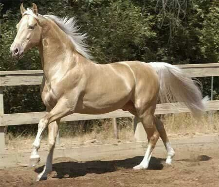 Never was a huge fan of light colored horses, but this one is just gorgeous!