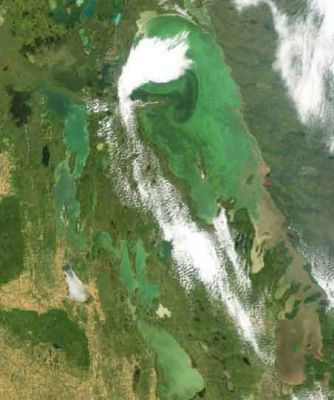 """The Global Nature Fund has declared Lake Winnipeg as the """"threatened lake of the year"""" for 2013. (Lake Winnipeg covered in algae blooms. July, 2007)"""