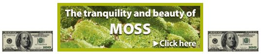 Why consider gardening with moss?