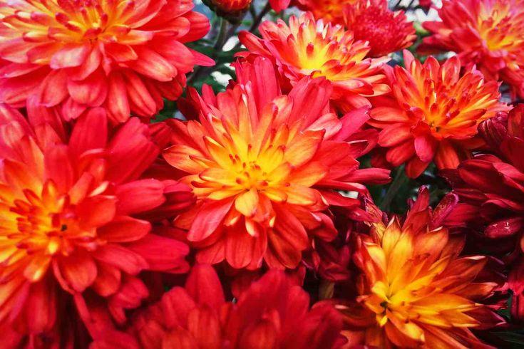 Een blik naar buiten en je weet gelijk dat het herfst is. Ondanks dat veel planten in het najaar niet meer bloeien, hebben ze goede voeding nodig om zich tegen de winter te beschermen. Je tuin bemesten in de herfst is dus een uitstekend idee. Op die manier help je niet alleen je tuin de