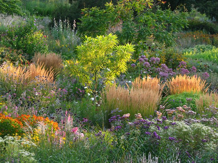 100 ideas to try about garden beds and plant combos for Hearty ornamental grasses