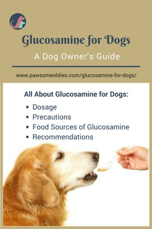 Learn more about how glucosamine can help an old dog with joint pain and arthritis. #olddogs #dogarthritis #glucosamine