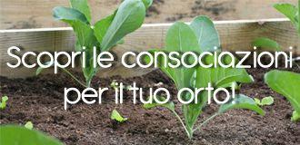 Scopri come fare le consociazioni nel tuo orto