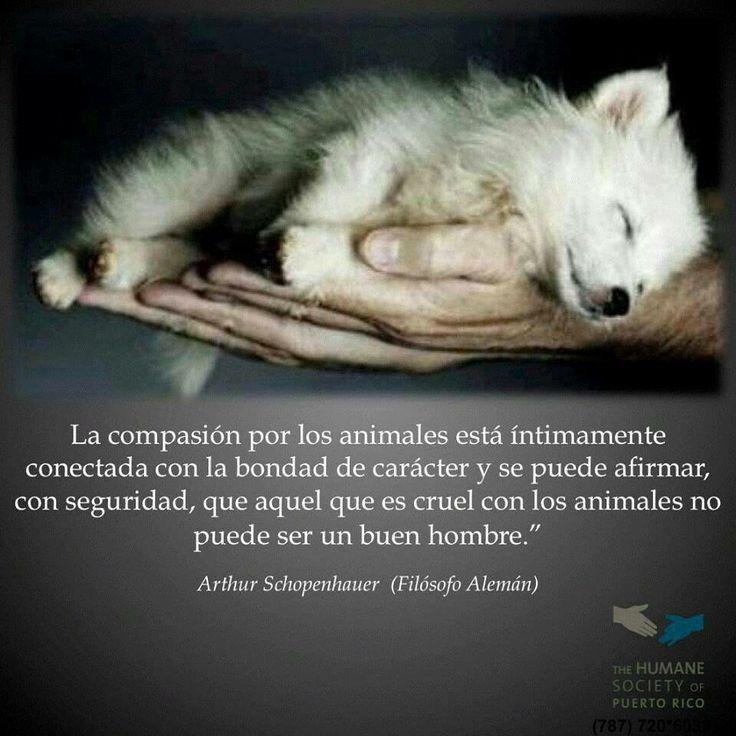 La compasión por los animales está íntimamente conectada con la bondad del carácter... ¡buenas noches!
