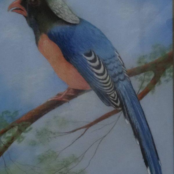 Sam Dresden – pastel van een kleurrijke vogel