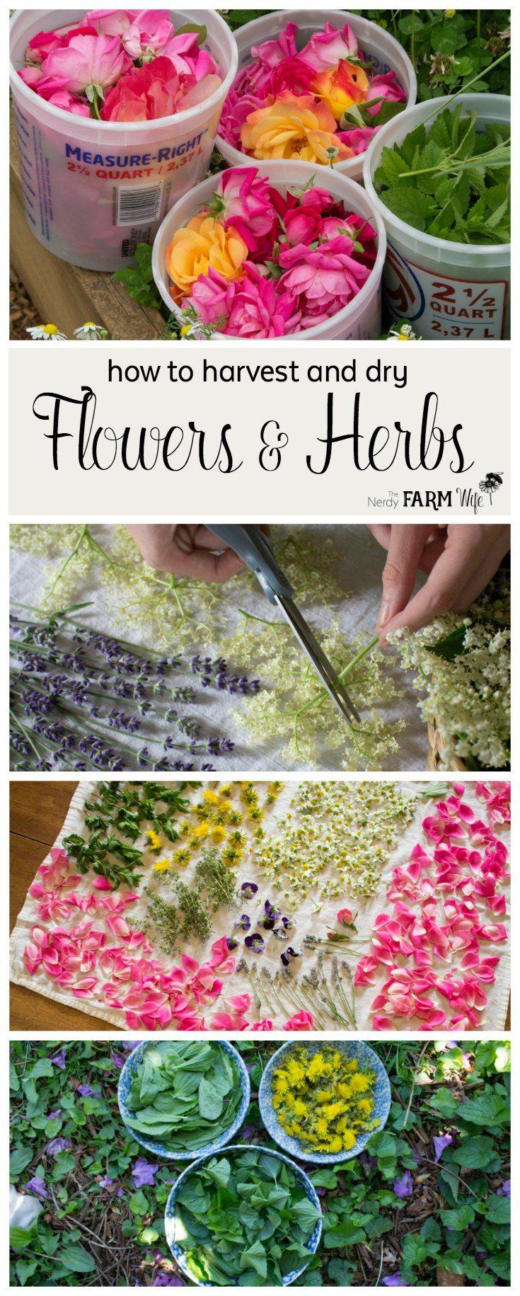 best  list of flowers ideas on   butterfly plants, Beautiful flower