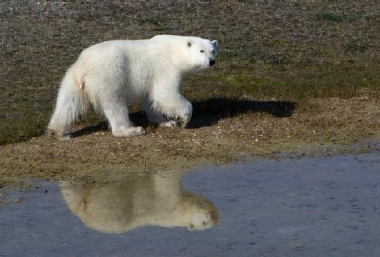 nunavut arctic