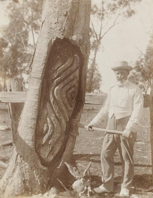 Carved trees--Wiradjuri Country--Photographs of Edmund Milne standing next to Aboriginal Arborglyphs [carved trees], Gamboola near Molong, 1912    For more information on this image http://acms.sl.nsw.gov.au/item/itemDetailPaged.aspx?itemID=891475    Search our collections at http://www.sl.nsw.gov.au/
