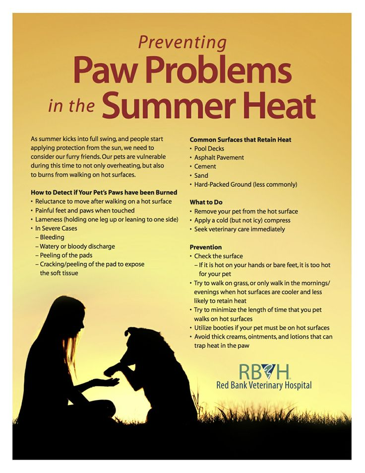 59 best Pet Care & Safety Tips images on Pinterest