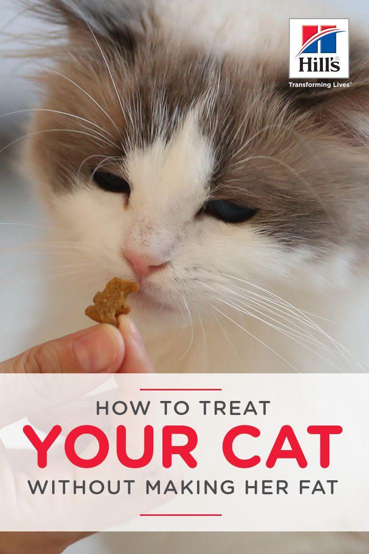 Healthy Cat Treat Options For Your Feline Friend Hill S Pet Cat Nutrition Cat Care Cat Health Problems