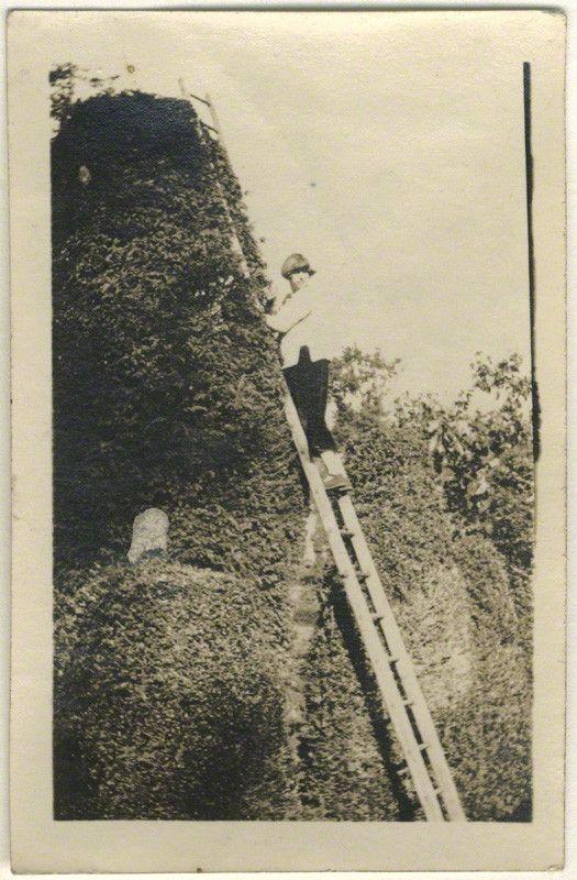 Dora Carrington | Dora Carrington, by Unknown photographer, 1920s - NPG x13074 ...