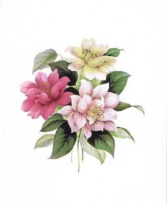 Camellias I (*)