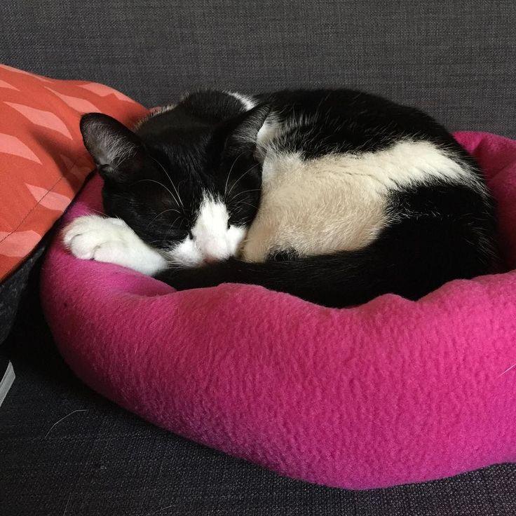 Happy B Day kyoko! Oggi compie due anni la nostra amata Kyoko  Hoy es el cumple de Kyoko! Feliz cumpleaños citación! #istacats #catsofinstagram #cat #kyokosmood #happybirthday #2 #cats #kitty #compleanno