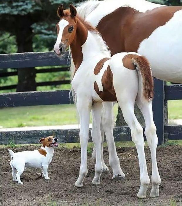Deux chevaux et un chien