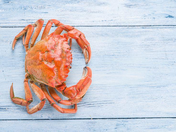 Concombre Libanais farci au crabe par le Chef Giovanni Apollo #apollorecettes