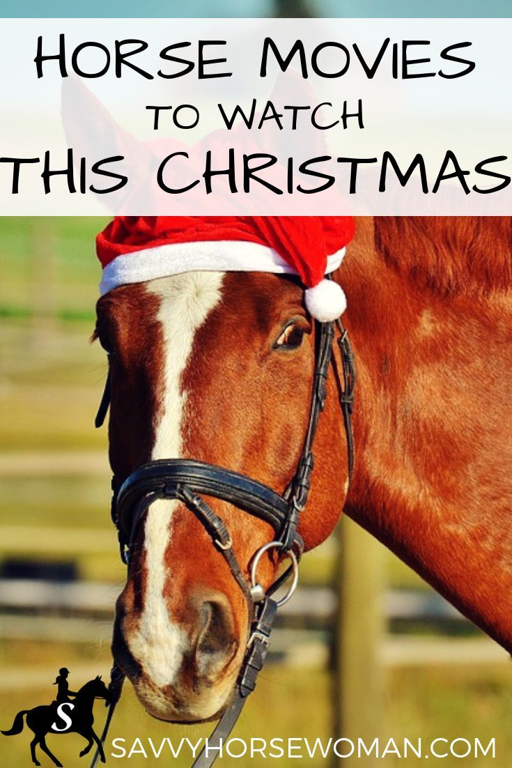 Horse Movies to Watch This Christmas | Horses | Pinterest | Horses ...