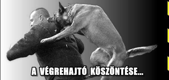 ÁTFOGÓ VIZSGÁLAT A VÉGREHAJTÓK ELLEN.