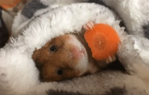 New party member! Tags: relax hamster relaxing om nom