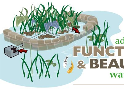 Pond Construction & Enhancement: Enhance Pond Filtration with a Bog Filter