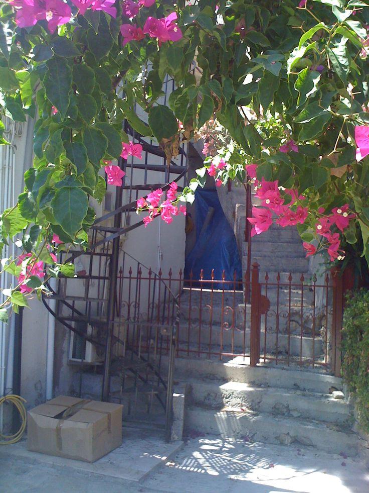 The colours on the #Greek island of #Alonissos.  Read my guest post for @PurpleTravel.co.uk.co.uk here http://blog.purpletravel.co.uk/2013/11/12/guest-post-alonnisos-secret-greek-island/